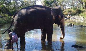 (Tamme) olifant wordt gewassen in Mudulumai
